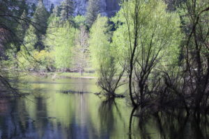 The pristine waters of the Merced River, Yosemite National Park